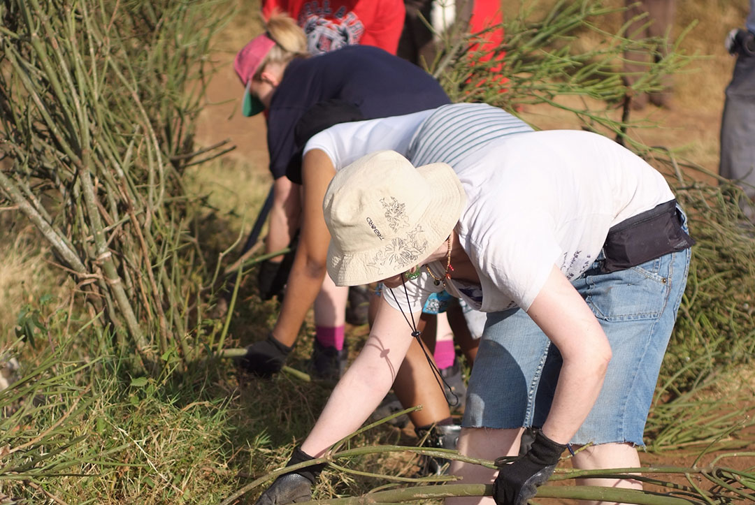 Kenya 2011 : Cleaning the land
