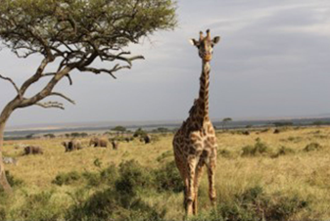 Kenya 2015 : Checking out the local wildlife